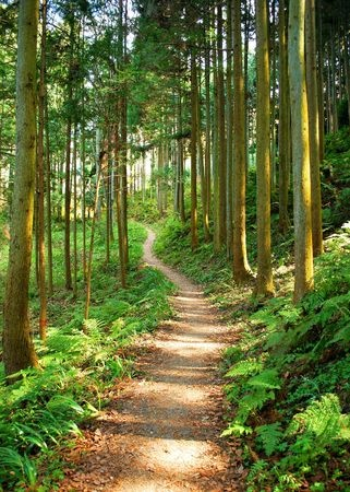 Best Hiking And Walking Trails In Hampton, VA